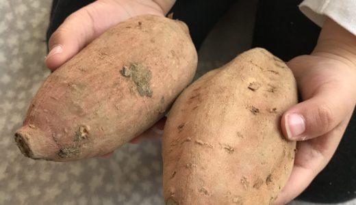 安納芋で作る焼き芋。クックパッドのレシピVSおいも農家のレシピどちらが美味しいか対決!